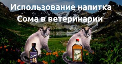 Напиток Сома в ветеринарии - кошка2