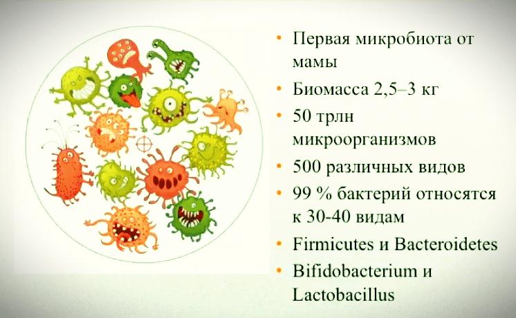 Ферментирование трав. Микробиота